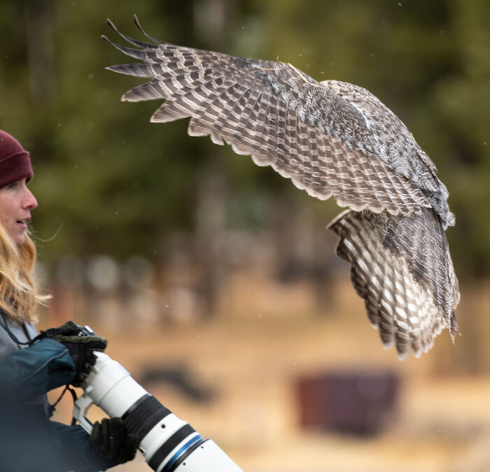 Owl Lands On this Photographer's Lens, Ends Up Mixing In Completely