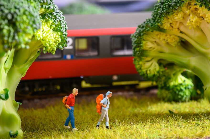 In To The Broccoli Forest