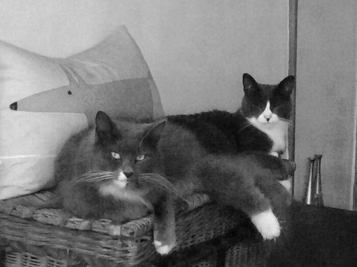 My Boys...genji & Ginko