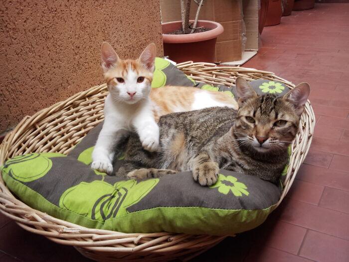 Cesarino & Nello