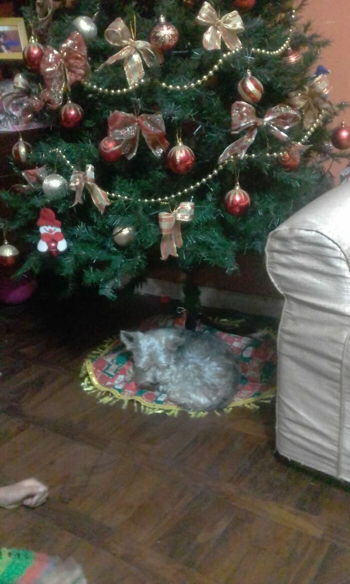 The First Xmas Gift!!!