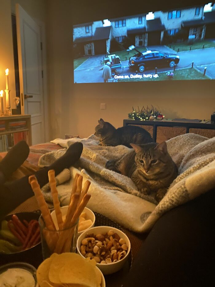 My Most Recent Pic - An Evening Spent Watching Harry Potter With Our Two Furry Friends And Snacks