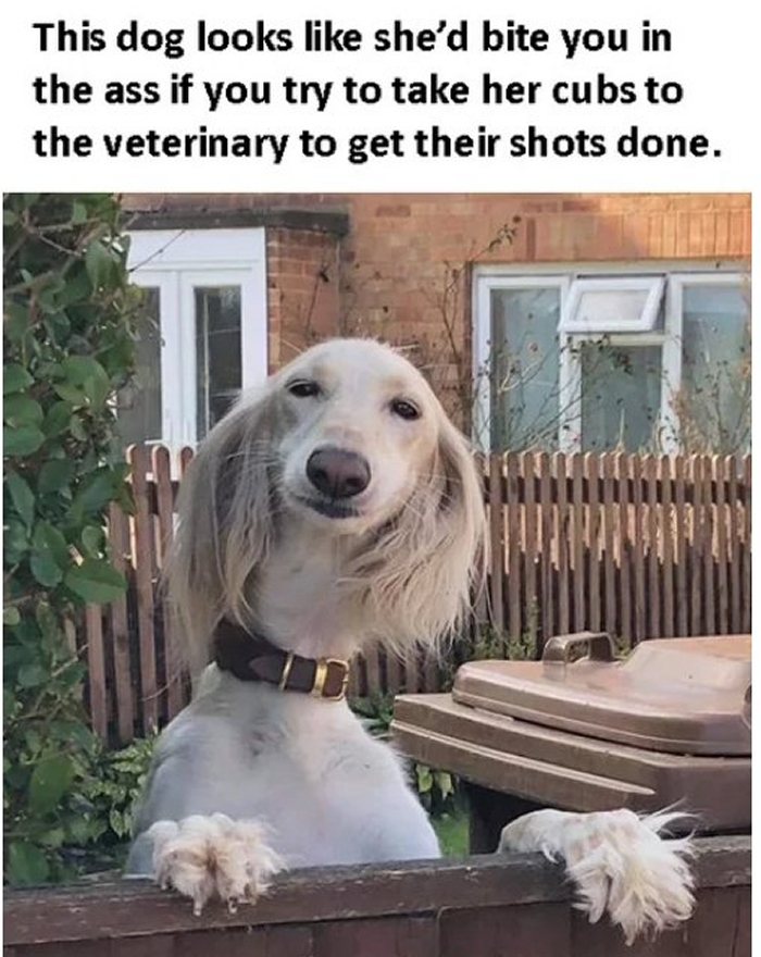 Even Dogs Have Karens.