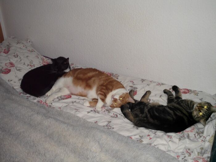 My Dear Kitties. But Only Mr. Binks, The Black One, Is Still With Me. His Friends, The Red Charlie And Lenny, The Tiger Are Already In Heaven. We Miss Them Every Day.