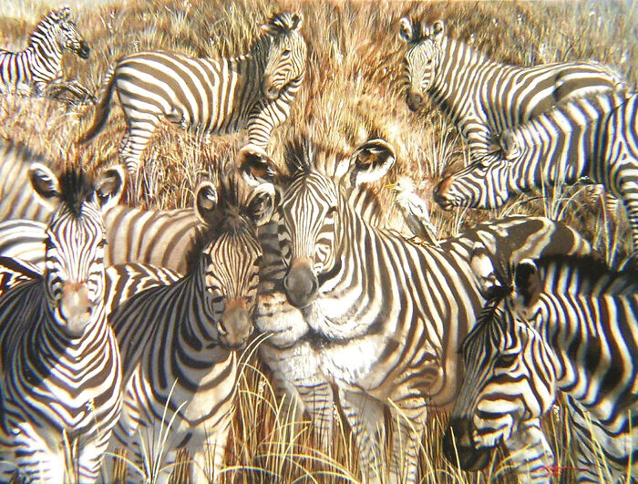 Lion Or Zebras?