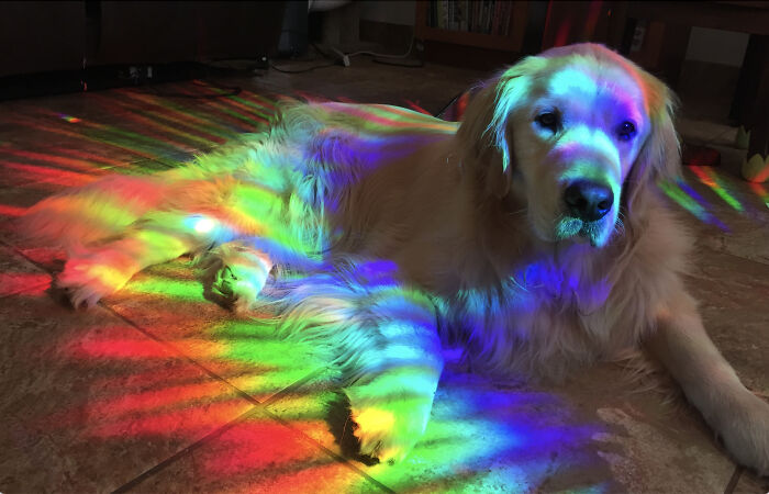 Mana Nui, The Rainbow Retriever