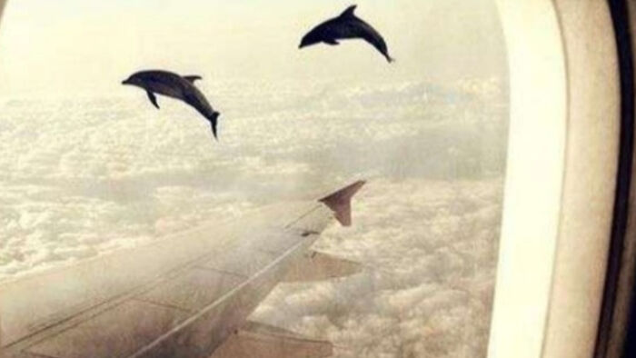 Dolphin In The Sky