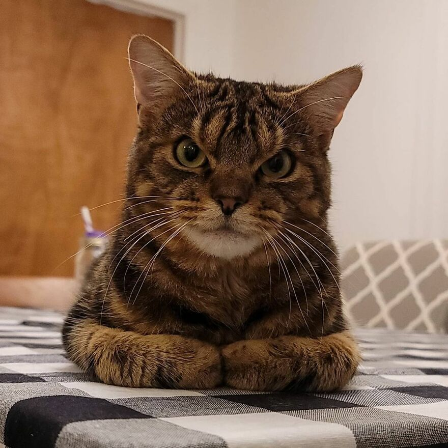 This Angry Face Hides An Absolutely Charming Cat