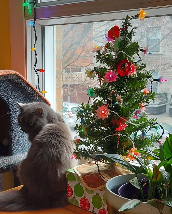 Nothing Says Christmas Like A Tree, And A Cat!