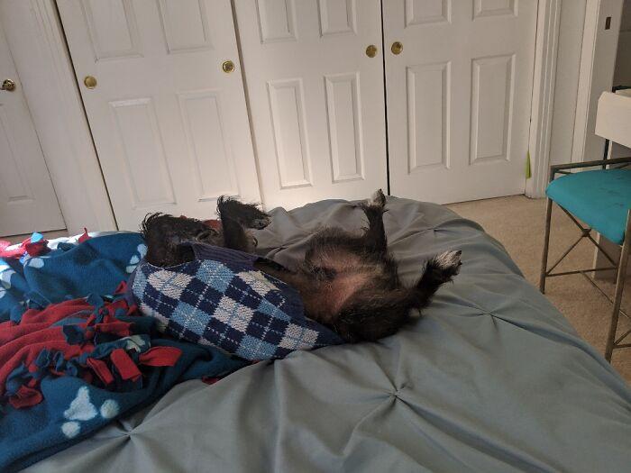 My Dog Sleeps Like Hes Dead