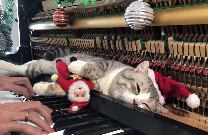 """People Are Loving This Video Of A Cat Getting A """"Piano Hammer Massage"""" While His Owner Plays Christmas Songs"""