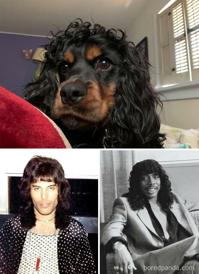 This Is Herbie. I Can't Decide Who He Looks Like More. Young Freddie Mercury Or Rick James