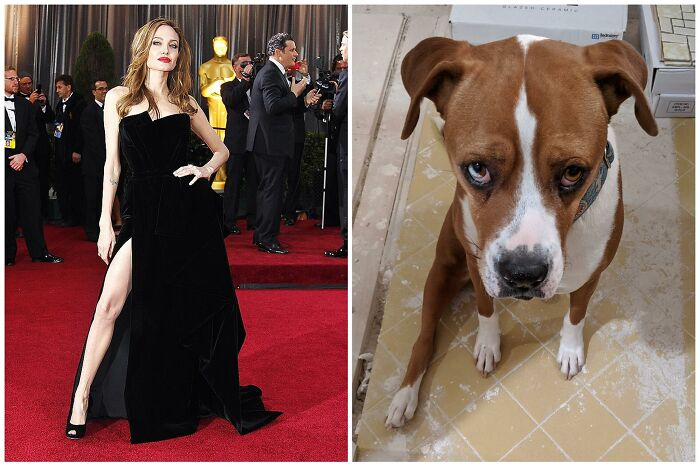 Argus Can't Bend His Rear Right Leg Due To An Old Pre-Rescue Break As A Stray, So His Sits Always Have A Sexy Angelina Jolie Vibe