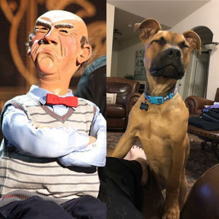 An Oldie But A Goodie. Rudy Resembles Walter When You Don't Throw His Toy Fast Enough