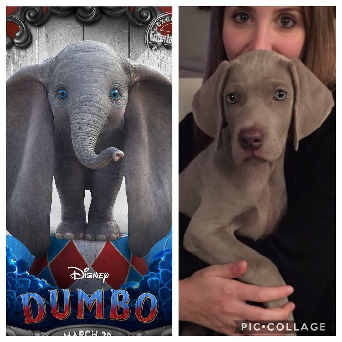 Dumbo Boy
