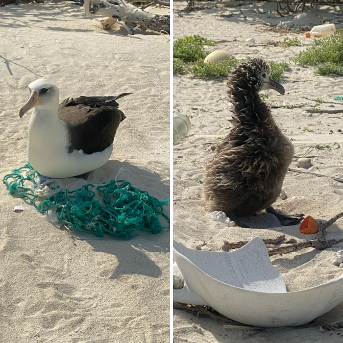 I Took Pictures Of Trash Babies In Midway Atoll