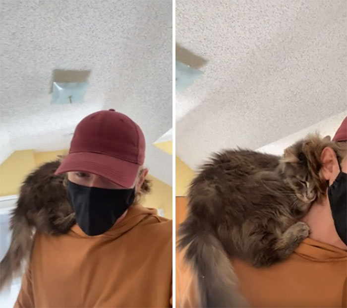 Within 2 Seconds Of Meeting The Cat I Was Adopting, She Climbed Onto My Shoulders