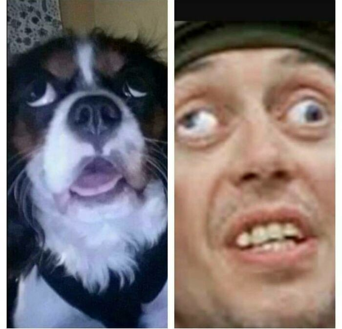 That One Time My Dog Saw A Fly And He Turned Into Crazy Eyes
