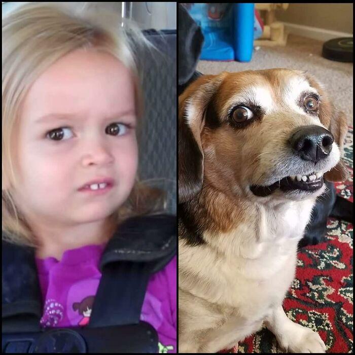 My Late Mayer Bee Was Meme Girl Twin