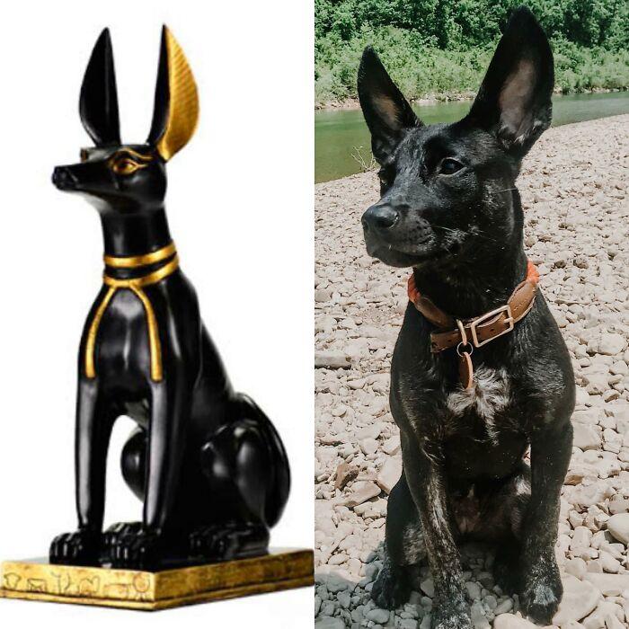 Anubis, Egyptian Jackal God Of Death & Juni. That's Settling