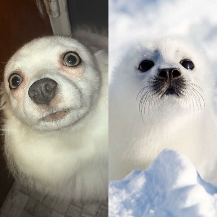 Layla Wanted To Give The Look Alike