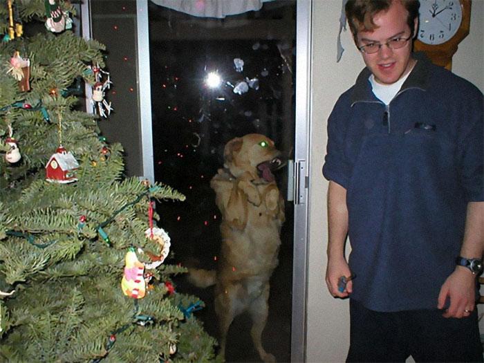 Dogs-Ruined-Christmas-Photos