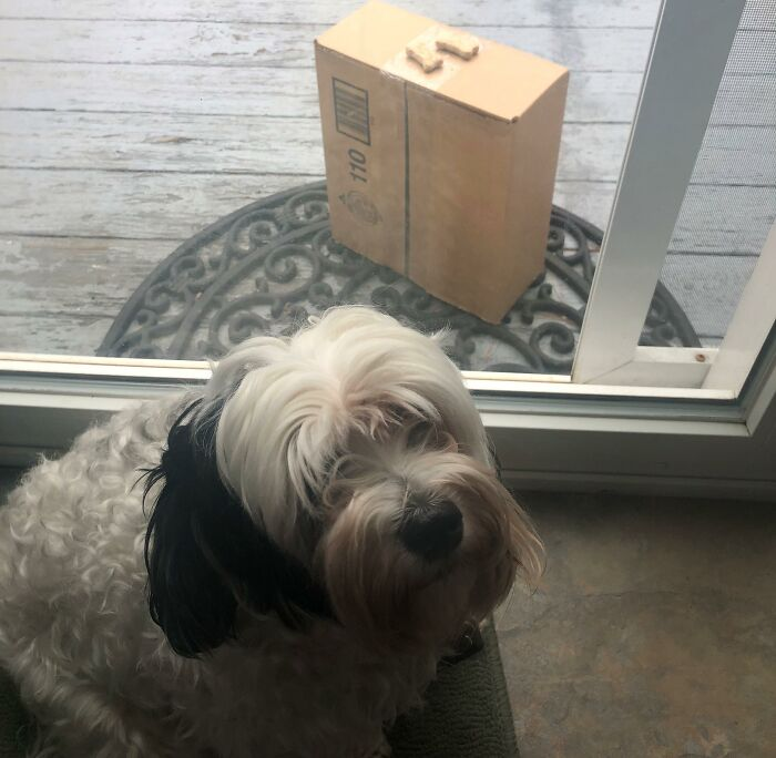 When Your Postman Leaves A Package As Well As Some Doggie Treats For Your Good Boy