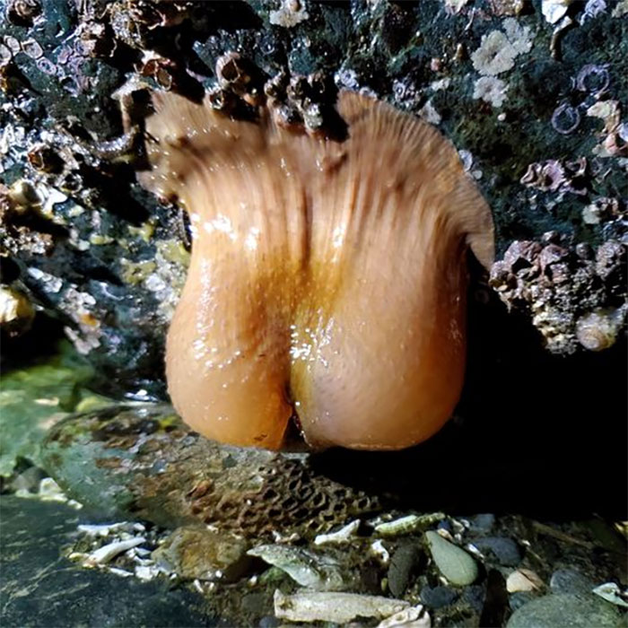 Found The Most Majestic Anemone On The Beach The Other Night. It Reminds Me Of Something, But I Can't Quite Put My Finger On It...