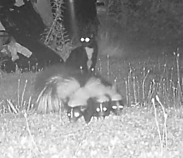 My Friends Cat Bailey Escaped His House. So I Set Up A Trail Cam. He Was Hangin With Da Big Boys In The Back Yard