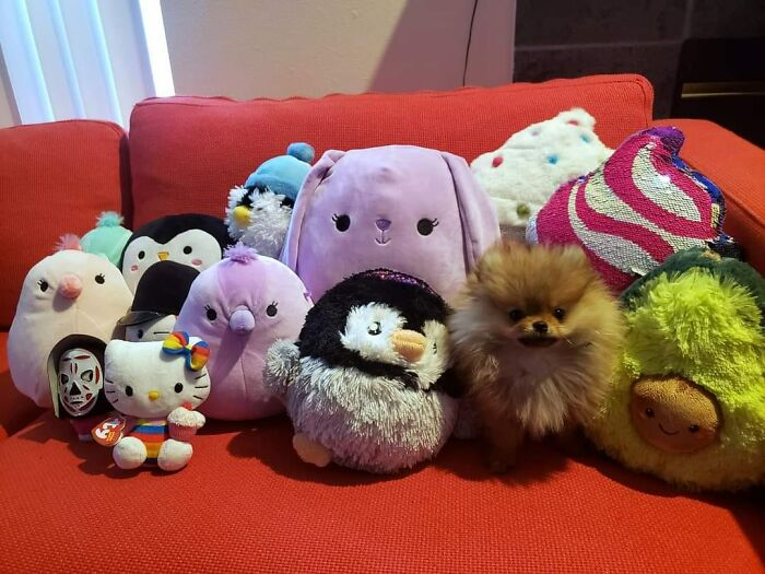 Nope, No Dogs Here - Just Plushies!