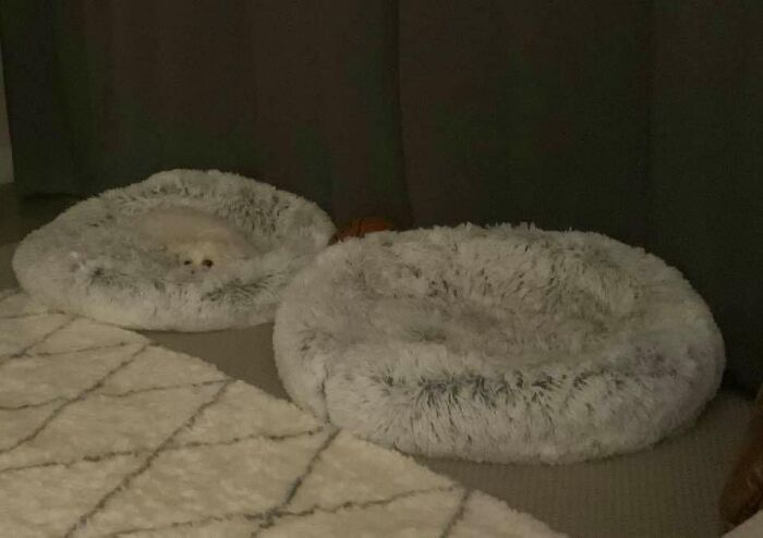 When Asked If She Wants To Go For A Walk, This La-Z-Girl Tries To Blend In With Her Bed