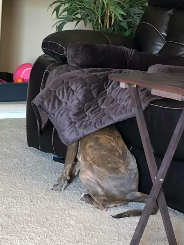 I Know This Is A Tough One, But Look Closely! She's A Master Of Disguise!