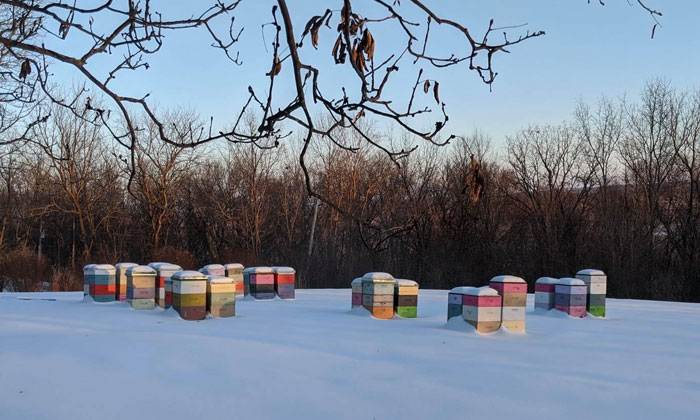 Beekeeper Shares What Bees Do To Stay Warm During Winter Because They Don't Hibernate