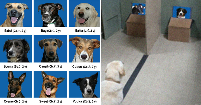 Researchers Try To Identify How Dogs Recognize Each Other, But Their Work Goes Viral For How Cute It Is