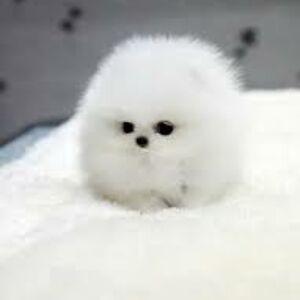 Just a Snowball