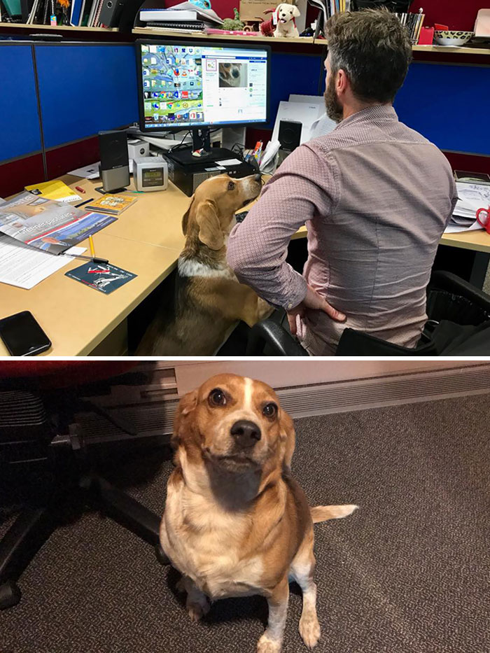 Lost Dog Shows Up Two Days Later At Her Owner's Office