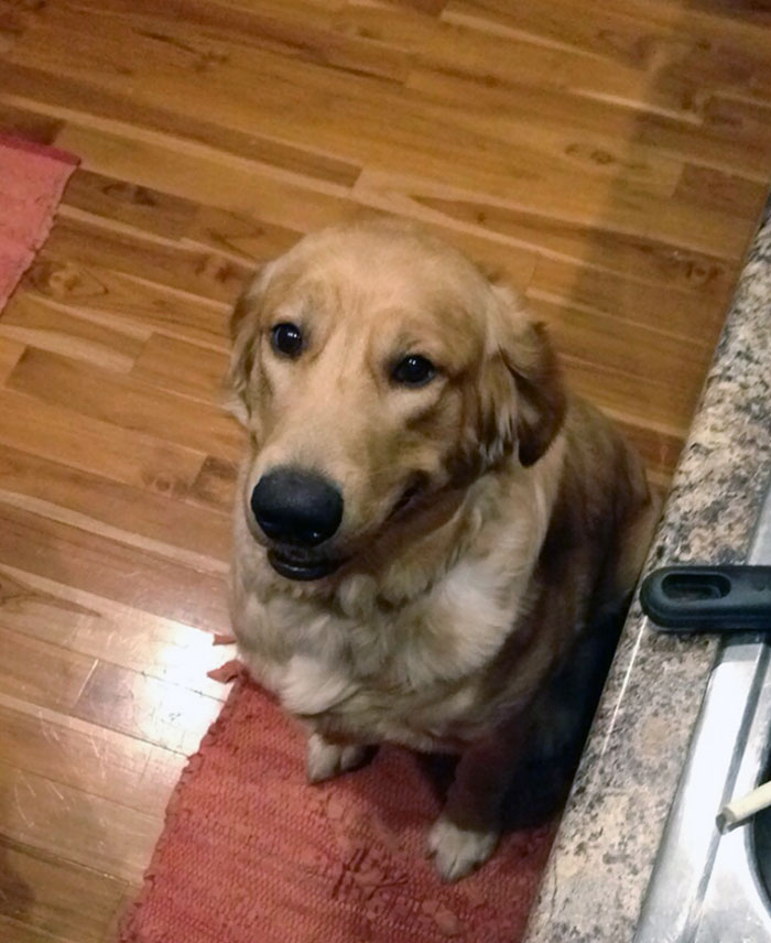 Tras un mes perdido en otro estado, hemos encontrado a nuestro perro