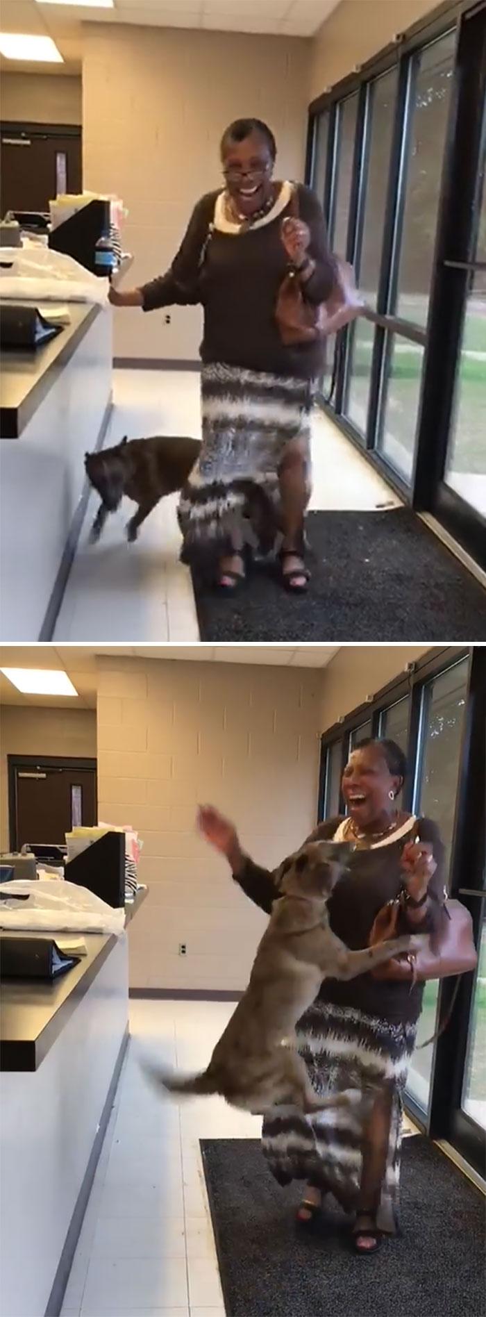 Un perro desaparecido durante más de dos semanas se reencuentra con su dueña en el refugio de animales de la ciudad de Jackson