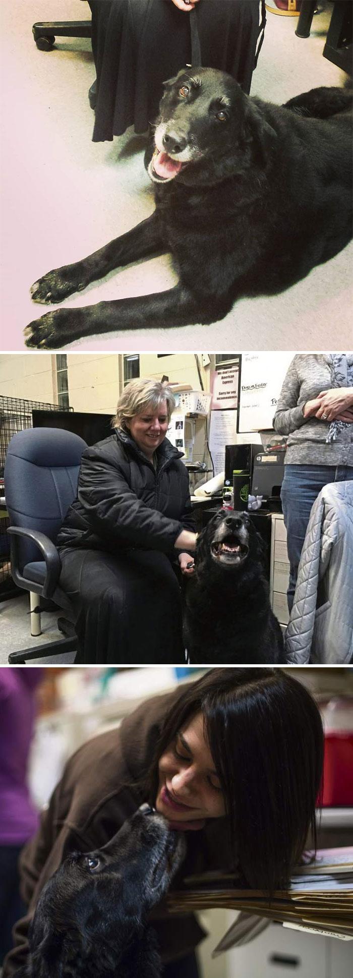 Una familia se lleva la sorpresa de su vida cuando su perro regresa tras desaparecer hace 10 años