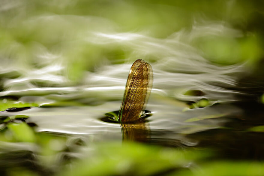 Category Other Animals: Highly Commended, 'A New Immersion' By Ruben Perez Novo