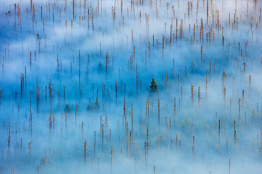 Category Plants And Fungi: Winner, 'Dead Forest' By Radomir Jakubowski