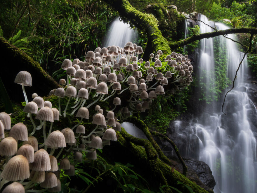 Category Plants And Fungi: Runner-Up, 'Enchanted Forest' By Kevin De Vree