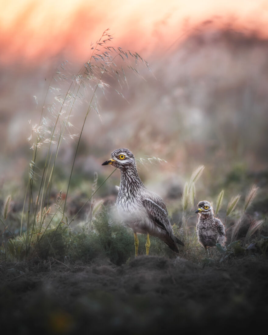 Category Yought 10-17 Years: Highly Commended, 'Evening Walk' By Giacomo Redaelli