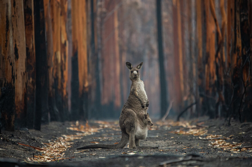 Category Man And Nature: Winner, 'Hope In A Burned Forest' By Jo-Anne Mcarthur