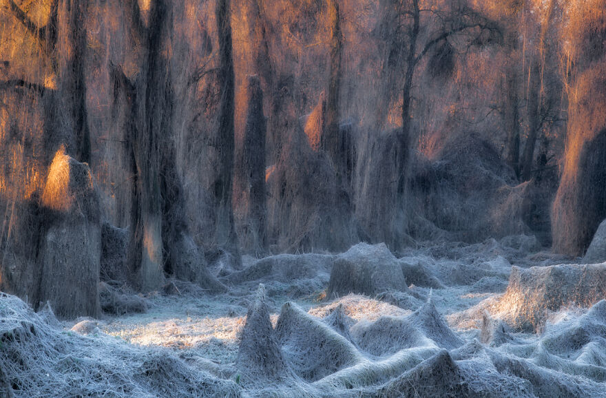 Category Landscapes: Winner, 'Il Bosco Incantato' By Stanislao Basileo