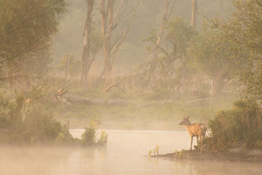"""Category Animals Of """"De Lage Landen"""": Highly Commended, 'Red Deer In Oostvaardersveld' By Andius Teijgeler"""