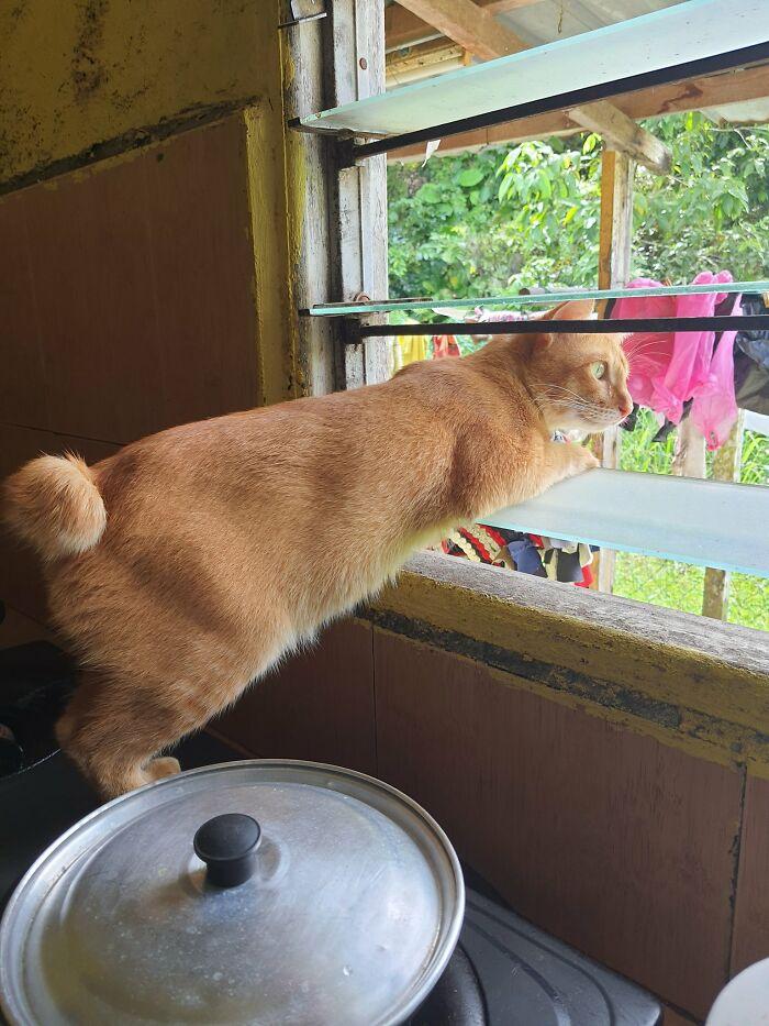 Nosey-Neighbors-Pets-Photos