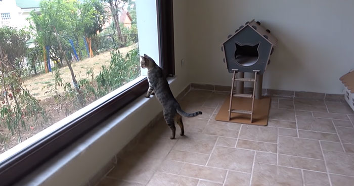 Viral Video Captures A Group Of Outdoor Cats Stepping Inside A House For The First Time In Their Lives