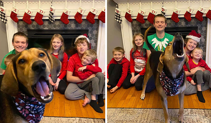 Dog Shamelessly Photobombs Every Single Family Christmas Pic, Ends Up Creating The Perfect Christmas Card