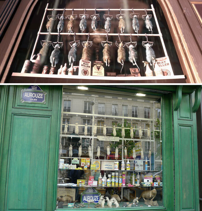The Shop With Dead Rats In The Window Is Based On A Real-Life Shop In Paris, France, Called Aurouze